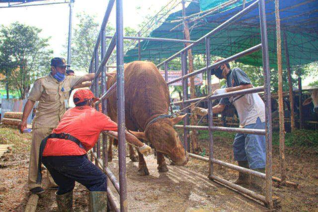 Petugas memeriksa kesehatan hewan kurban