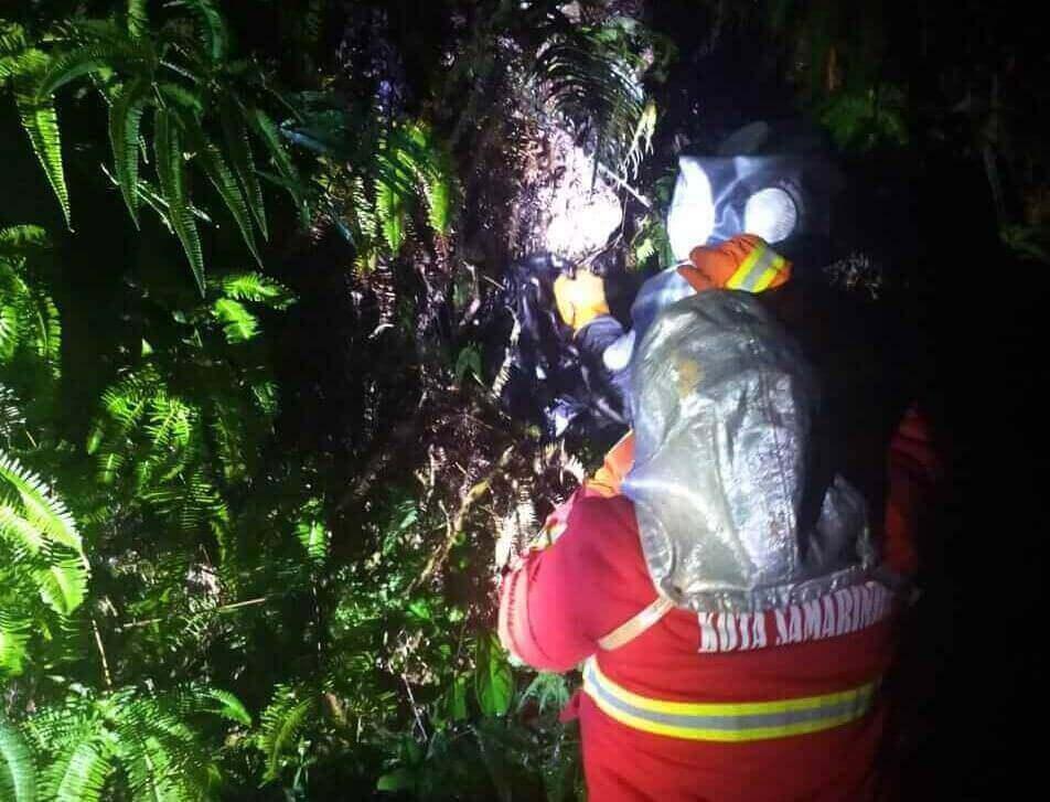 Bisa Sebabkan Kematian, Tim Damkar Evakuasi Sarang Tawon Tabuan