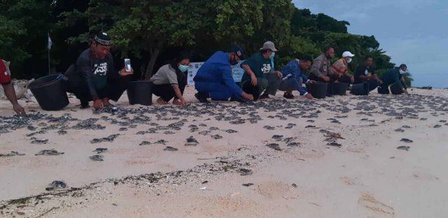 Peringati HKAN, BKSDA Lepasliarkan 2.000 Ekor Tukik penyu hijau