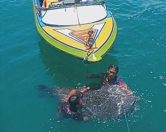 Diduga Ditabrak Kapal, Seekor Hiu Paus Ditemukan Mati di bibir pantai sepinggan - headlinekaltim.co