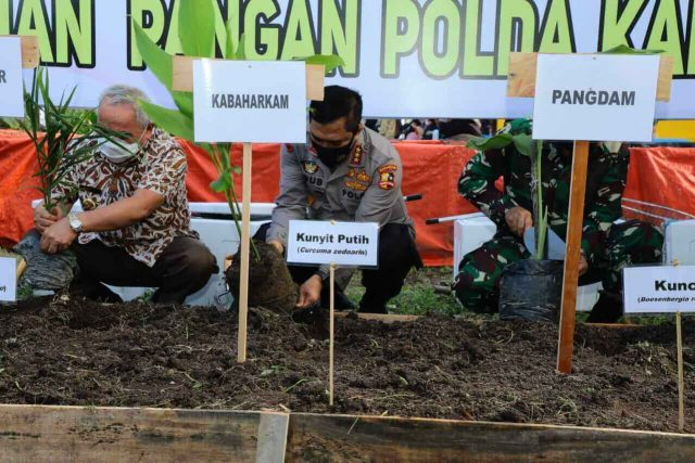 Kabaharkam Polri Tanam Bibit dan Panen Kangkung di Balikpapan - headlinekaltim.co