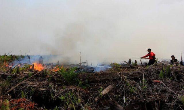 Kecamatan Sambutan dan Palaran Rawan Kebakaran Lahan - headlinekaltim.co