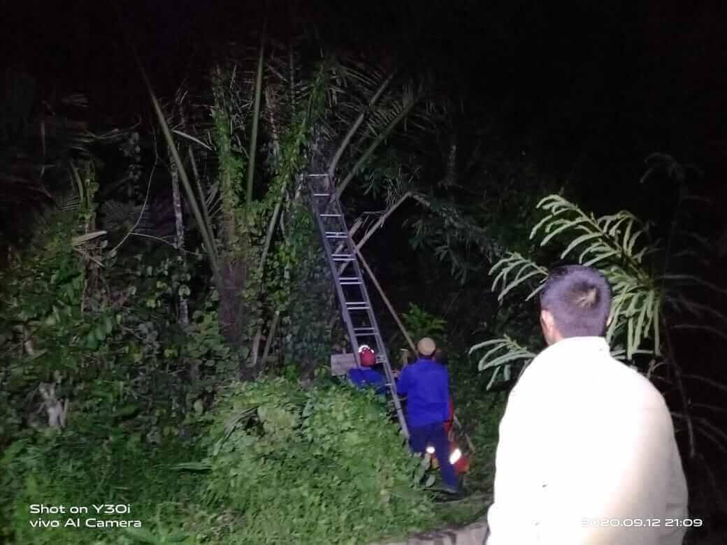 Warga Kena Sengat, Damkar Evakuasi Sarang Tawon Tabuan - headlinekaltim.co